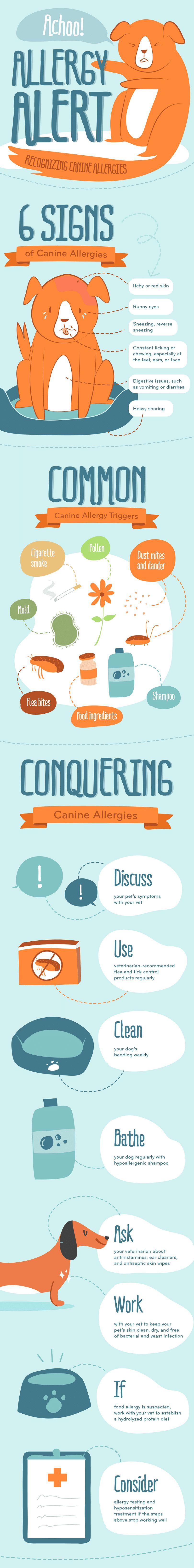 Las alergias del perro infografía