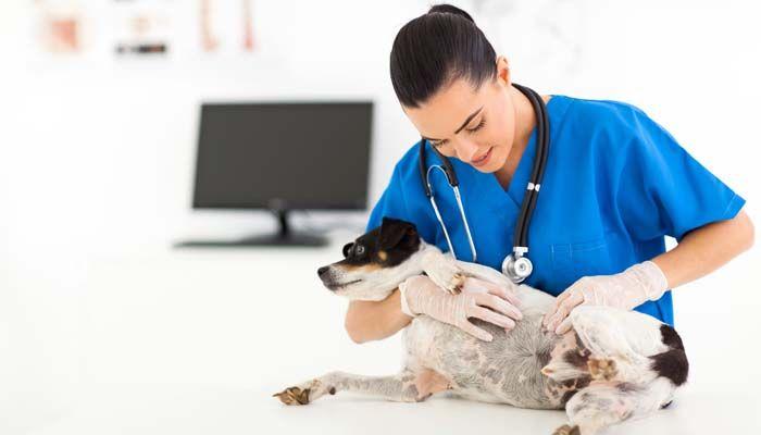 prueba cutГЎnea de alergia ocular perro