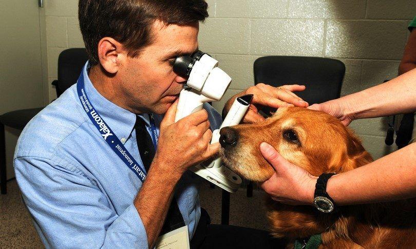 Las alergias del perro de los ojos: síntomas, causas y remedios básicos