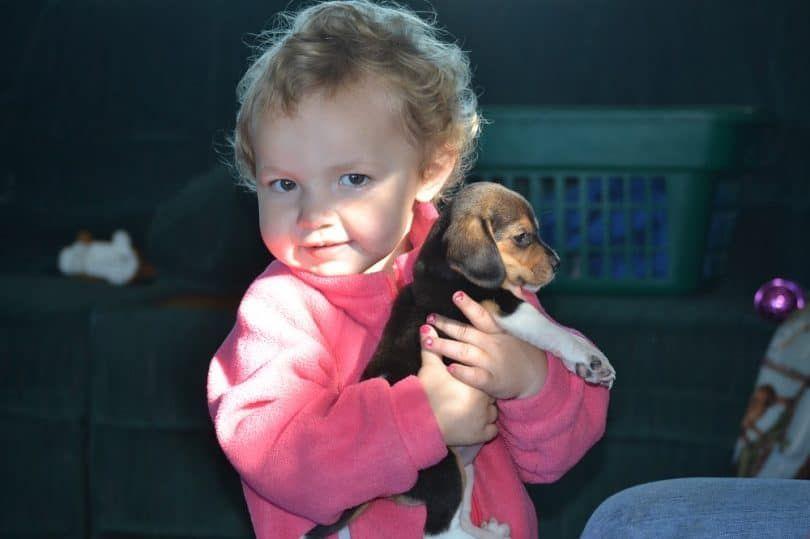 Cabrito que sostiene un beagle