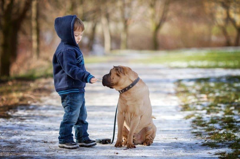 Niño pequeño con su perro en el parque dándole de comer