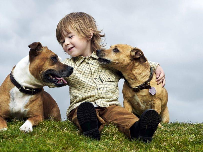 Kid y dos perros