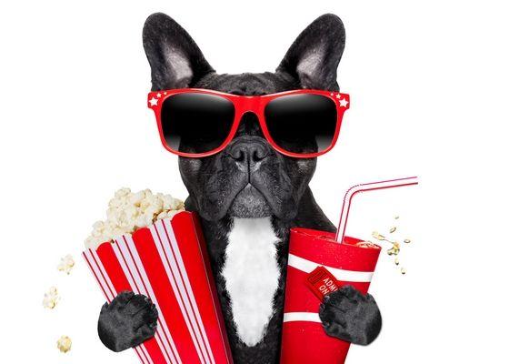 Festival de Cine de perro es un buen momento del grito!