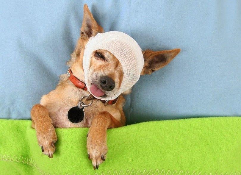 Perro guía de primeros auxilios para los dueños de mascotas