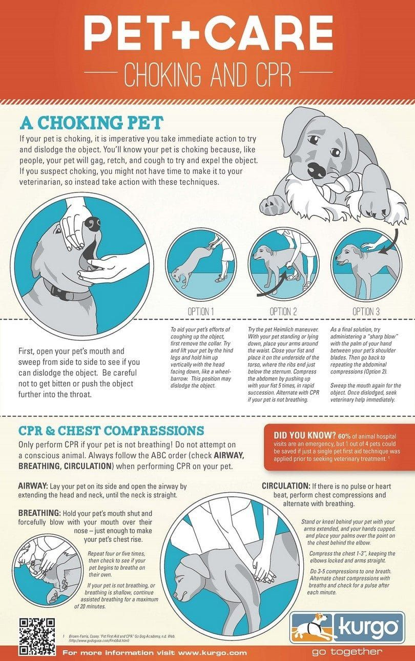 infografía cpr perro