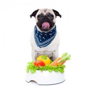 La fibra en la comida de perro para los perros con Diabetes