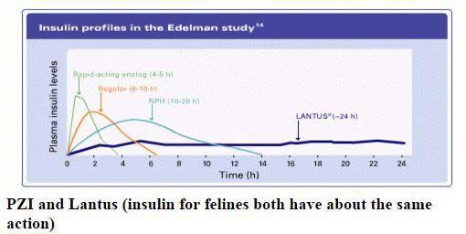 Gráfico de la insulina de la diabetes canina