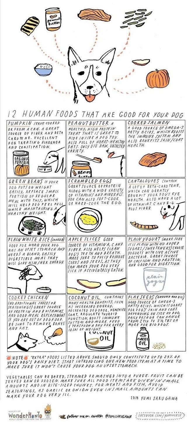 12 personas alimentos que son buenos para su perro
