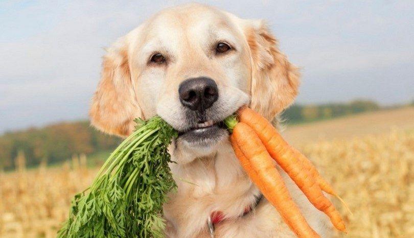 perro sano