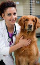 Gusano del corazón del perro: ¿qué es y por qué debería prevenirlo?