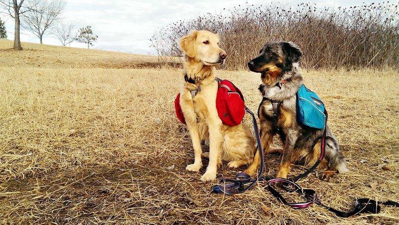Equipo de senderismo del perro: una guía para ir de excursión con su perro