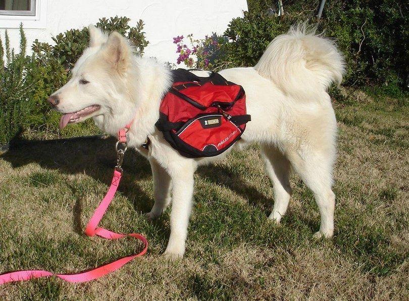 paquetes de senderismo para perros