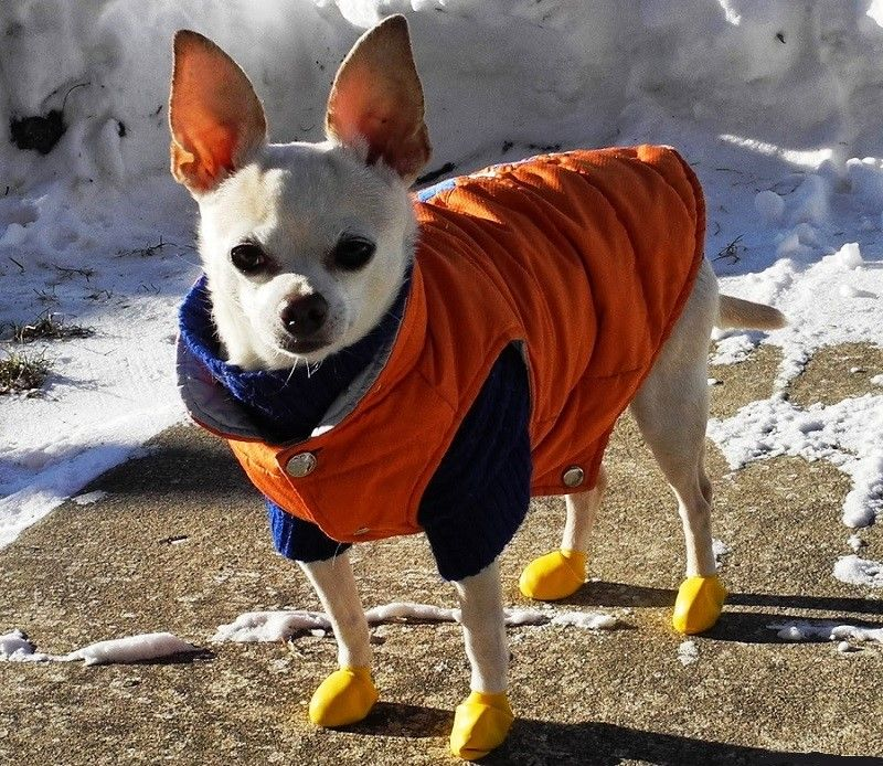 Perro con clother de senderismo