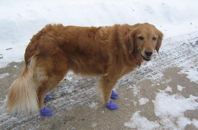 Perro con los zapatos