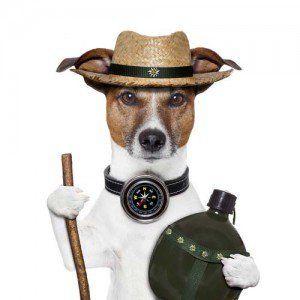 Senderismo del perro del correo y de la Confección