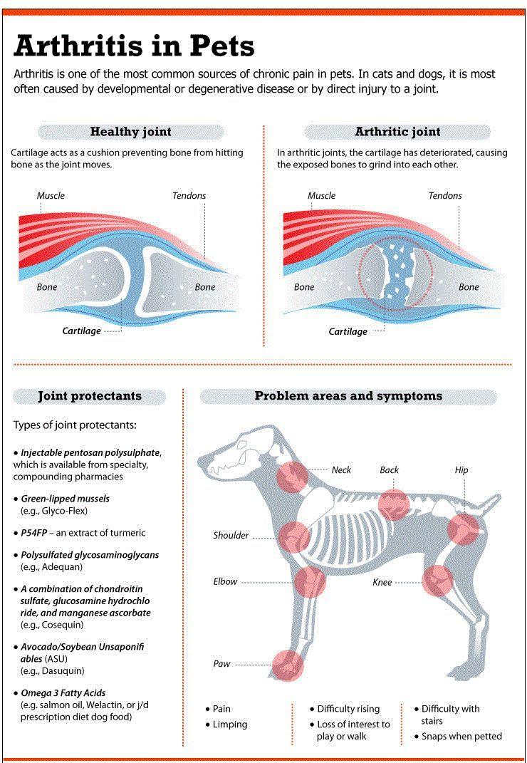 Dolor en la cadera del perro: cómo los problemas afectan las articulaciones mejor amigo del hombre