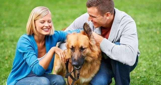 Perro en el medio: evitar problemas de relaciГіn