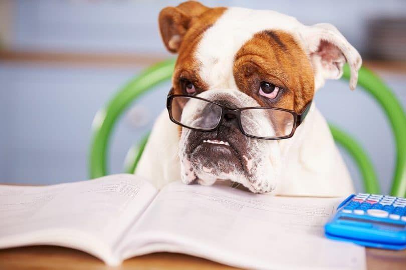 Pon a prueba tu IQ perros