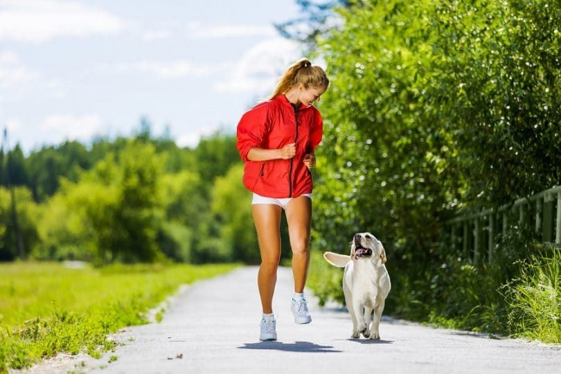 El ejercicio adecuado para el perro