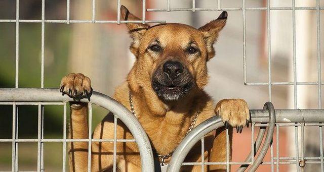 El perro que salta en la cerca