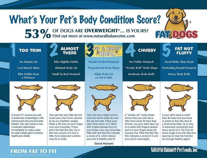 Perro`s body conditioning chart