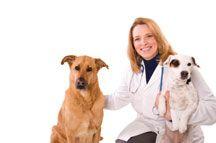 Castración del perro - guía de un propietario