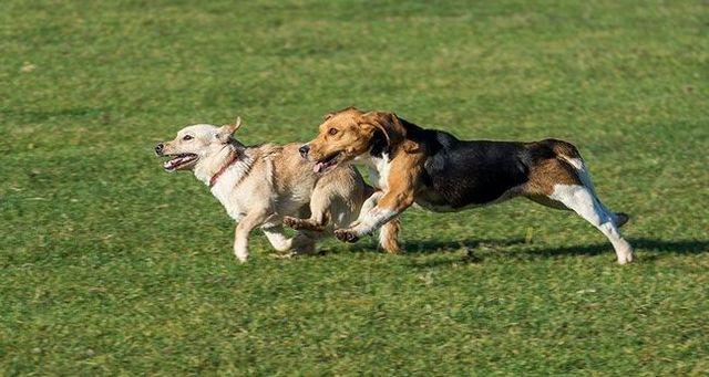 Problemas resueltos parque para perros