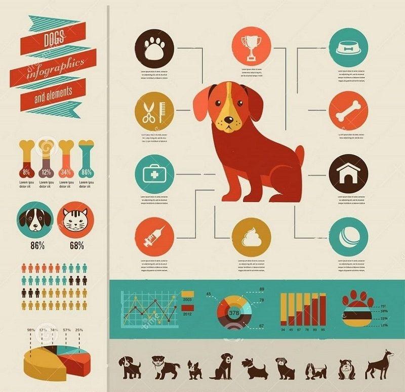 las necesidades de los perros