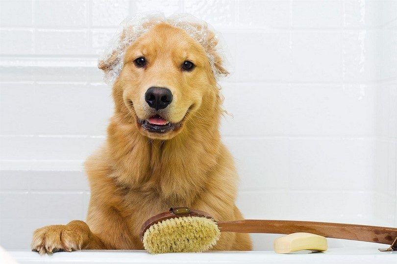 Prevención de baño de perro