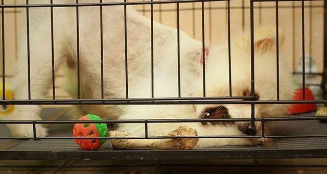 Problema de los perros: el ensuciamiento del cajГіn del perrito