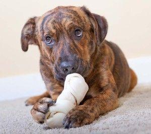 ВїQuГ© perro relativa al producto temas cubren los veterinarios Ver mГЎs frecuencia