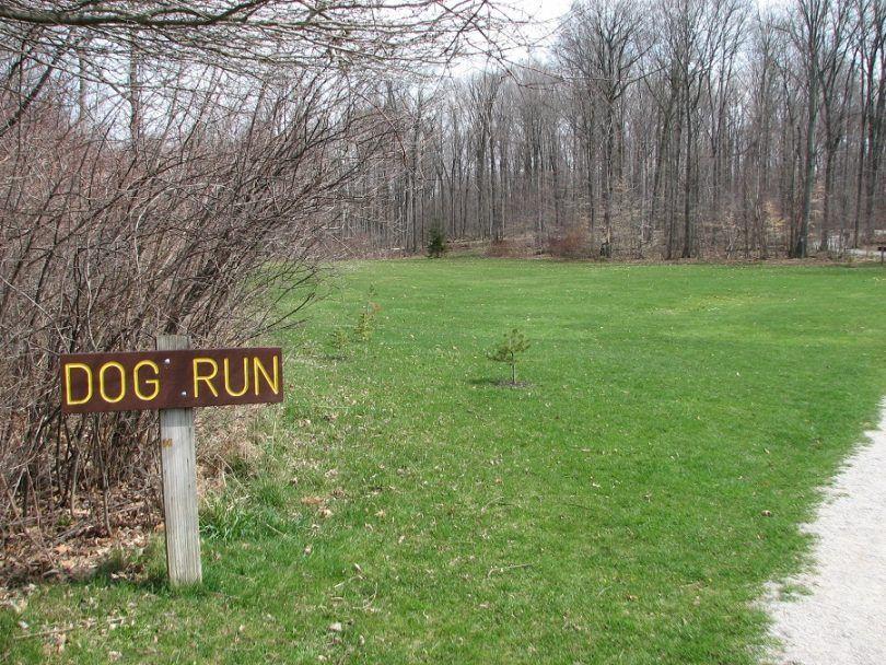 Perro ideas ejecute: mejorar el tiempo de su perro, mientras que en el período previo