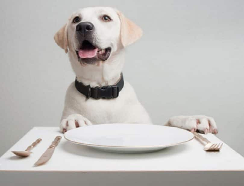 comedor perro
