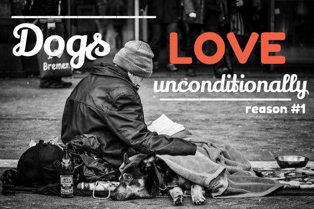 Refranes del perro: 15 razones por las que amamos perros