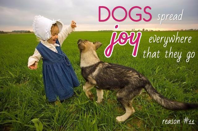 refranes preferidos para perros