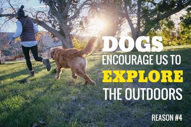 refranes para perros