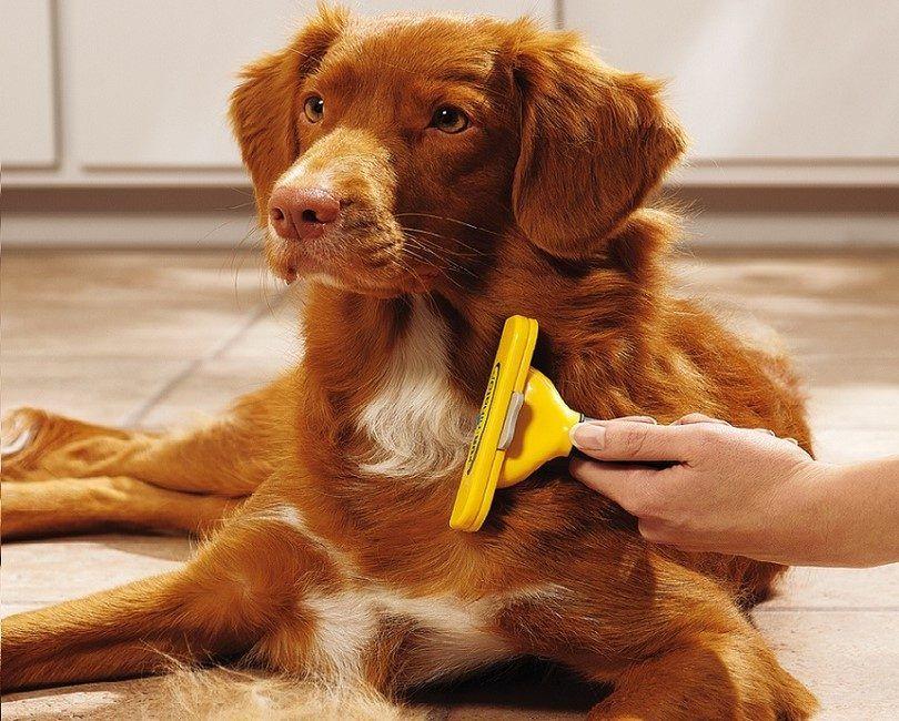 Herramienta de vertimiento del perro: cómo mantener la piel que volar bajo control