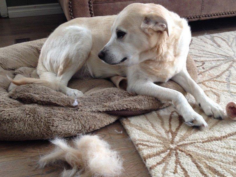 ¿Por qué preparar su perro