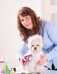 Pro peluquero de perros cepillar un perro