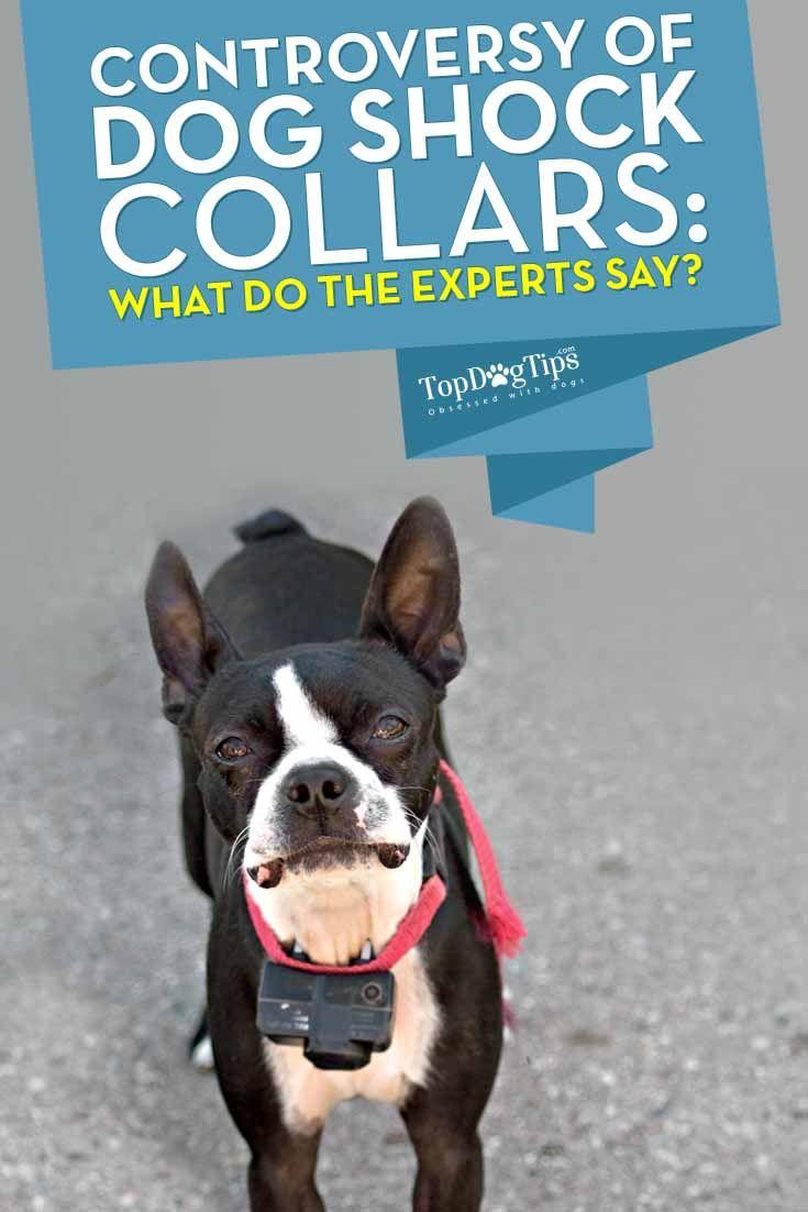 La controversia del choque del perro Collares - ВїquГ© es lo que dicen los expertos