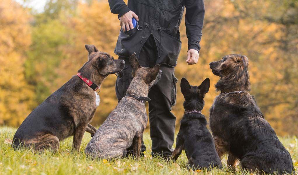 La controversia del choque del perro Collares