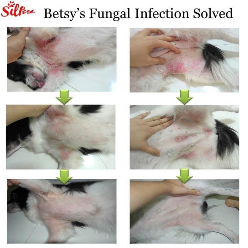 La infección fúngica resuelto