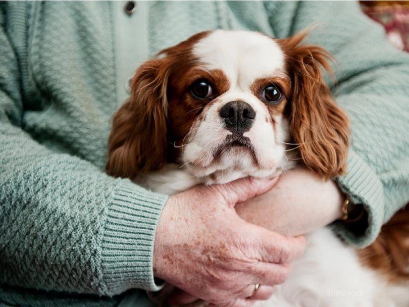 neoplasias de la piel en perros
