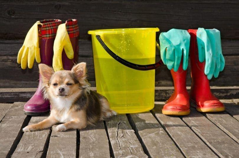 Limpieza entorno perro