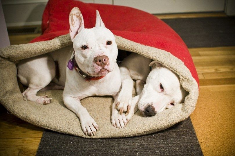 bolsa de dormir para perros