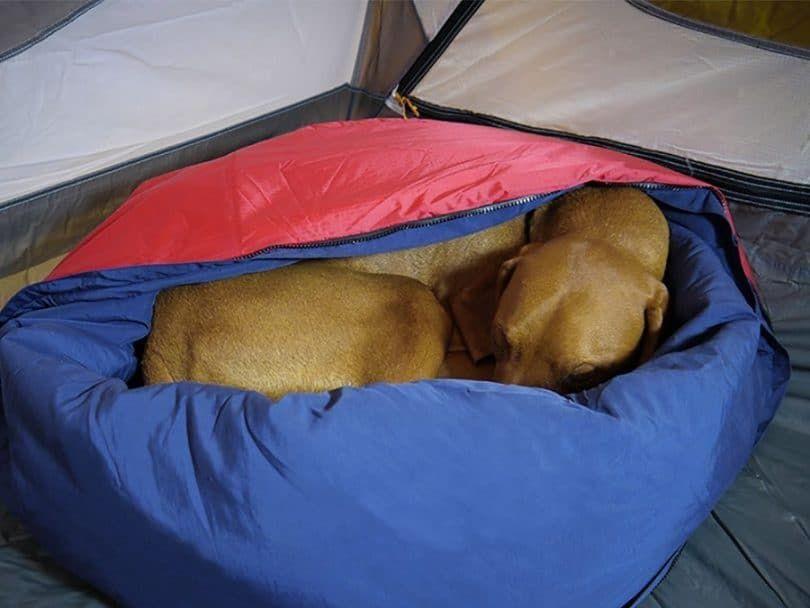 Noblecamper 2-en-1 cama del perro y del saco de dormir