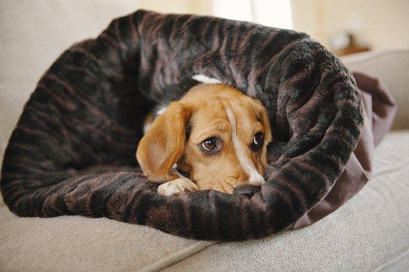 JUGAR. Estilo de Vida para mascotas y se acurrucan cama
