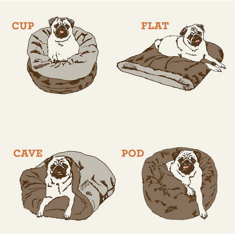 Perro bolsa de infografía