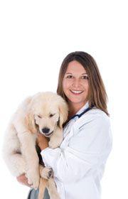La esterilización del perro - guía de un propietario