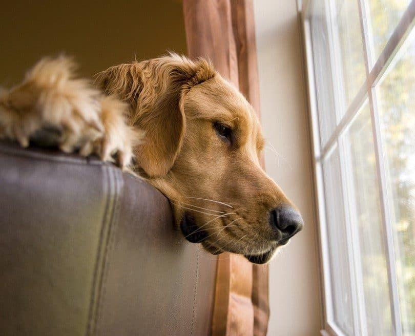 ansiedad de separación perro